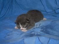 Feliks ten days old