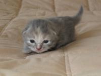Dusja thirteen days old