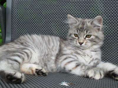 Elke twelve weeks old