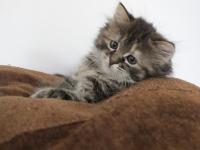 Fien eight weeks old
