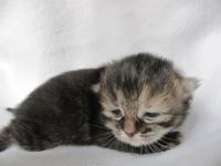 Fien ten days old
