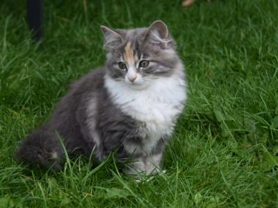 Hailey thirteen weeks old