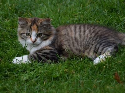 Hisolda thirteen weeks old