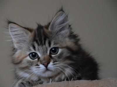 Indra twelve weeks old