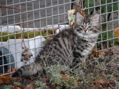 Iras twelve weeks old