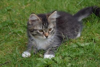Kiki twelve weeks old