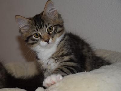 Kachel (Luka) eleven weeks old