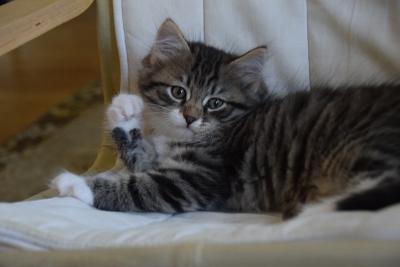 Kachel named Luka, eight weeks old