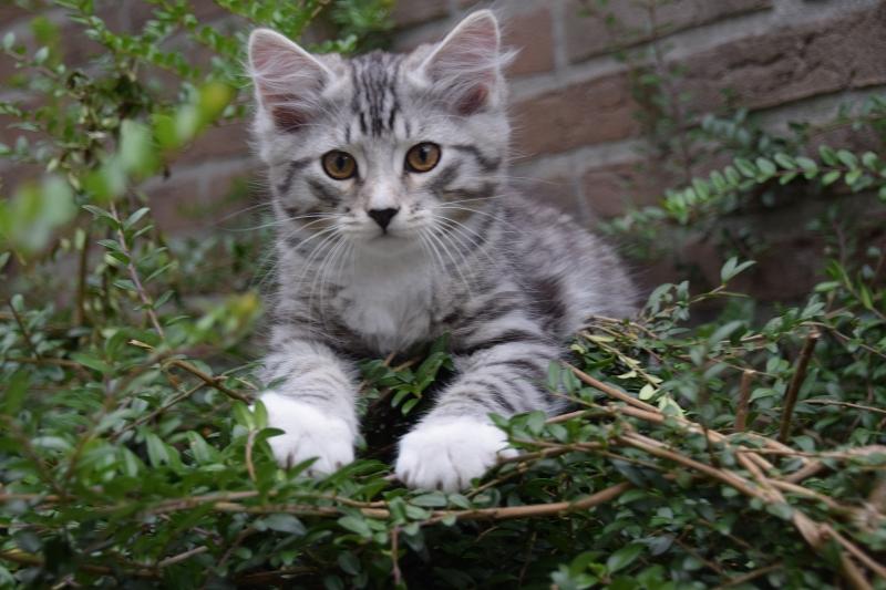 Karel twelve weeks old