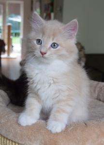 Lewin almost ten weeks old