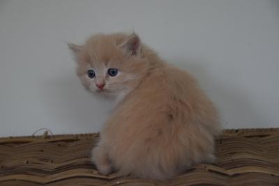 Lewin five weeks old