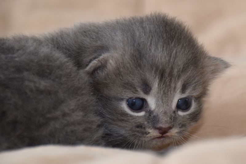 two and a half week old
