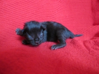Luuk one day old