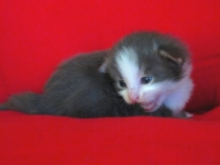 Tom two weeks old