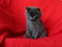 Joep ten weeks old