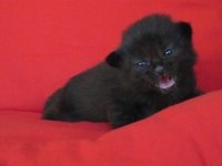 Luuk two weeks old
