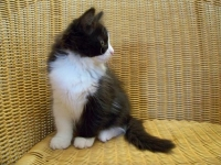 Elene eleven weeks old