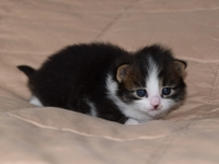 Jos two weeks old