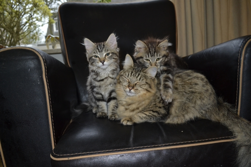 Ul'yana met haar kittens