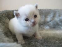Nusi two weeks old