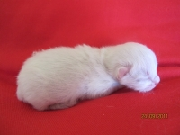 Nusi one day old