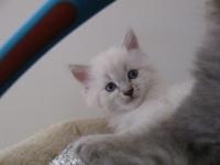 Boris six weeks old