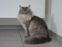 Basja eight months old