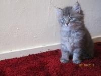 Sandor seven weeks old