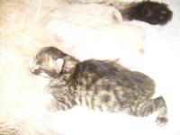 Luisa just born!