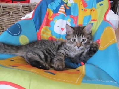 almost twelve weeks old