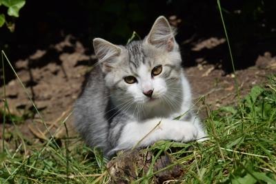 Kaya thirteen weeks old