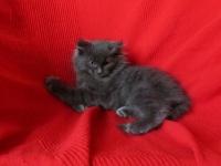 Joep ten weeks old