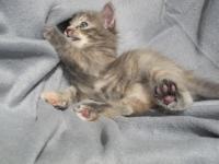 Lieke five weeks old