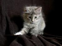 Lieke eight weeks old