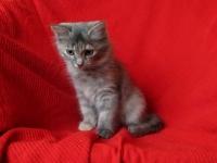 Lieke ten weeks old