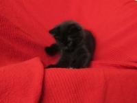 Luuk ten weeks old