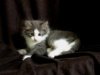 Tom eight weeks old