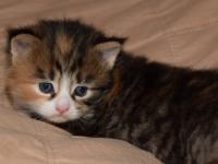 Indy three weekd old