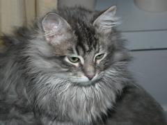 Huib (Boris) twenty weeks old