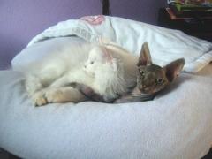 Alessia (Roosje) six months old