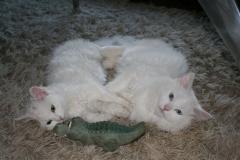 Alessio and Letizia (Luna) 1,5 years old