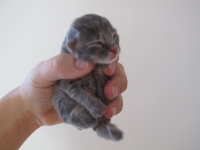 Basja one day old