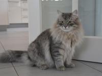 Boris eight months old