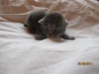Sandor nine days old