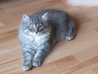 Aida thirteen weeks old
