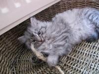 Aski eleven weeks old