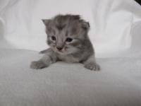 Aski two weeks old
