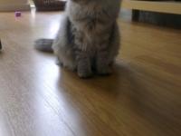 Aski six months old
