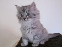 Aski six weeks old