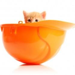 cat-hardhat